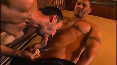 Hard gay dudes with big muscles grunt as they get wild together